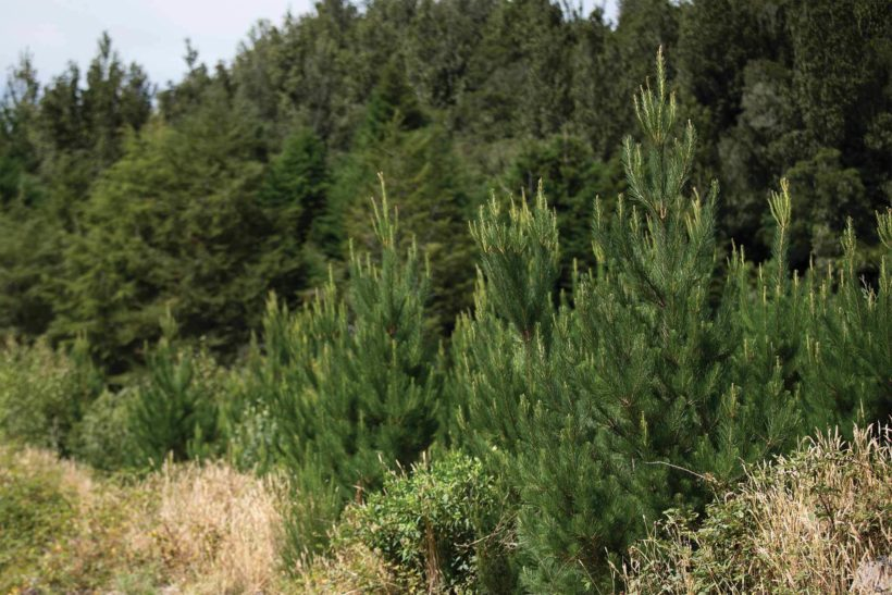 Biomass Growth and Carbon Sequestration - A Comparison of Tree Species - Abodo Wood