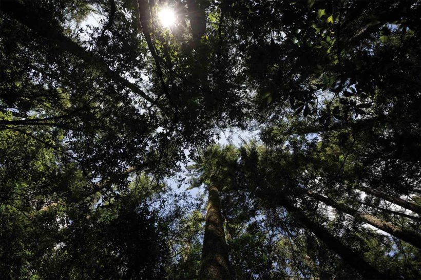 Five Rules for Choosing Truly Sustainable Timber - Abodo Wood