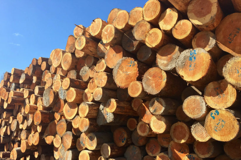 Heartwood Of Natural Species